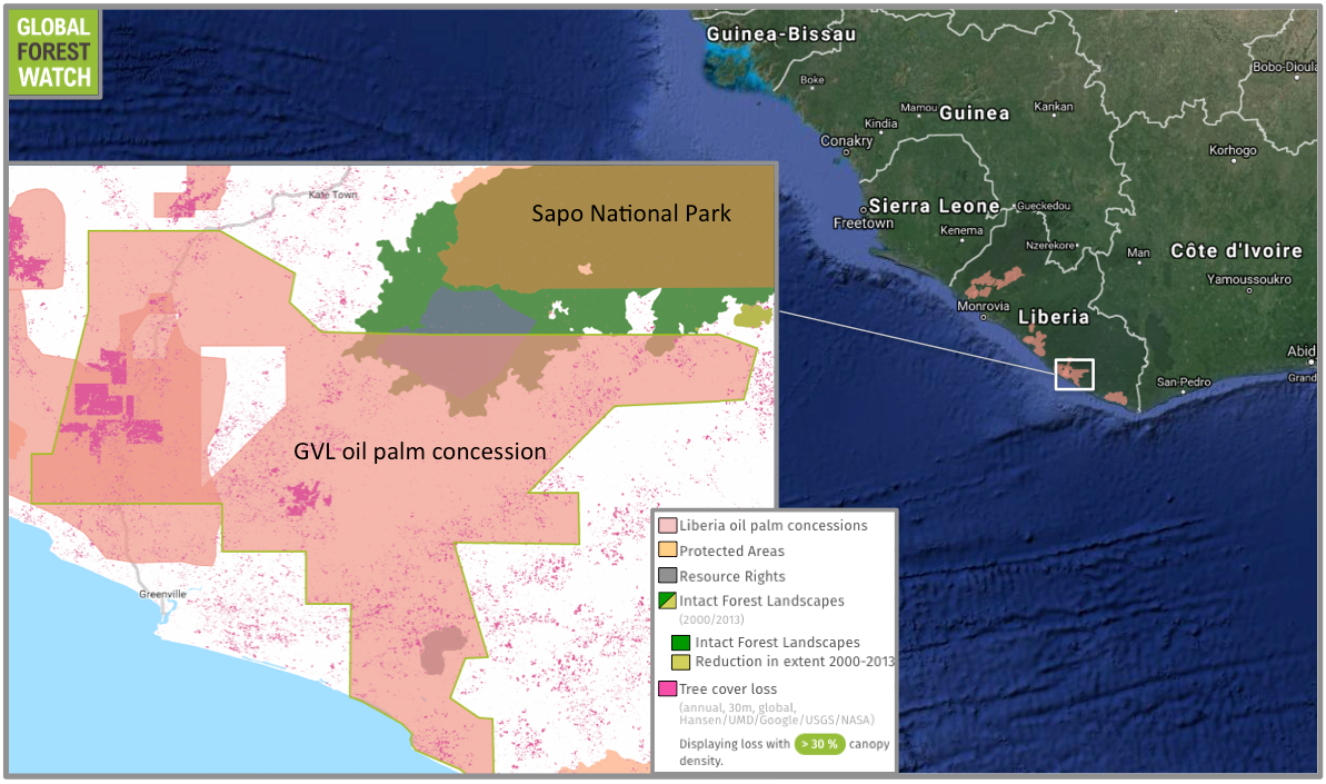 Intact Forest Landscapes (IFLs) are particularly large, undisturbed tracts of primary forest. Of Liberia's few IFLs, around a third have been degraded since 2000. One of GVL's oil palm concessions overlaps with a thus-far undegraded IFL -- but tree cover loss appears to be ramping up in the concession, with more than 8,000 hectares lost between 2001 and 2014.