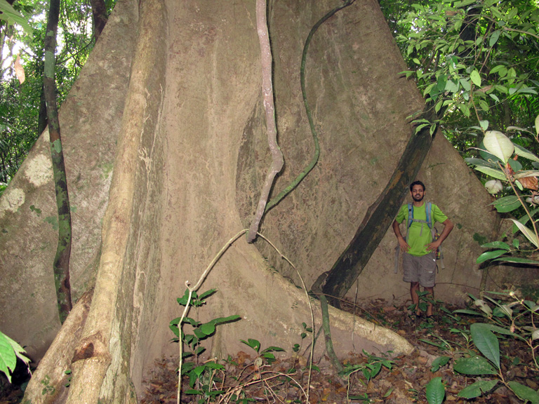 When people think of Bangladesh they probably don't think such giant trees still exist! Photo Credit: Creative Conservation Alliance