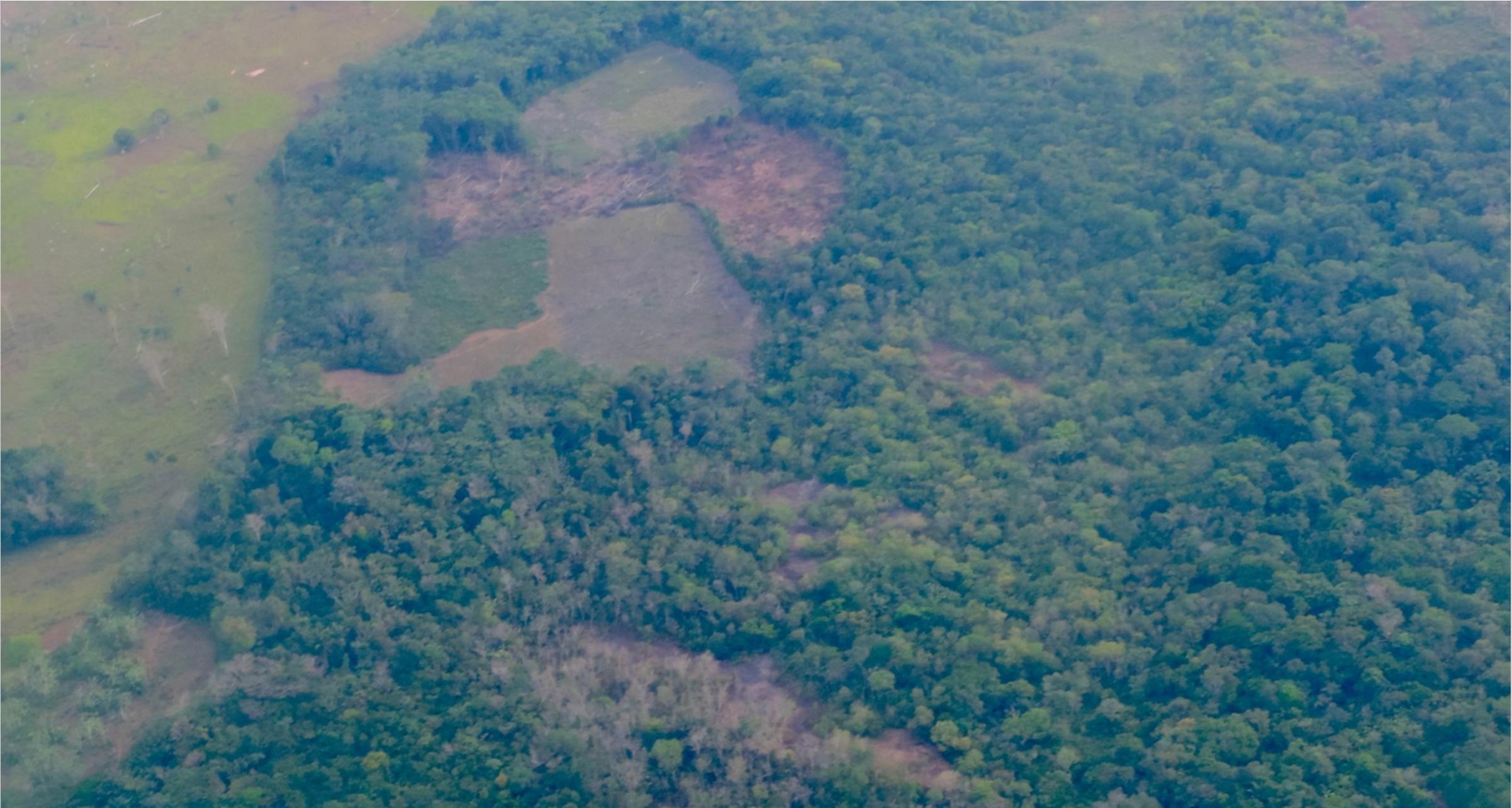 colombia-coca-plantations