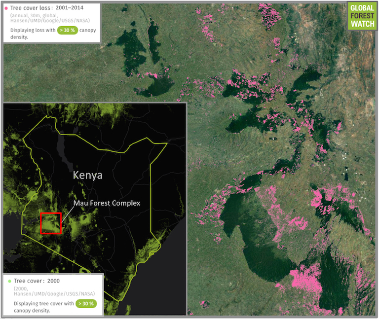 About 6 percent of Kenya is forested, most of which is situated in the country's southwest. The Mau Forest Complex is one of the region's densest spots of forest, but is becoming increasingly fragmented by human activity. Data from the University of Maryland visualized on the forest monitoring platform Global Forest Watch show Mau lost around 11 percent of its tree cover (in pink) in the 14 years between 2001 and 2014.