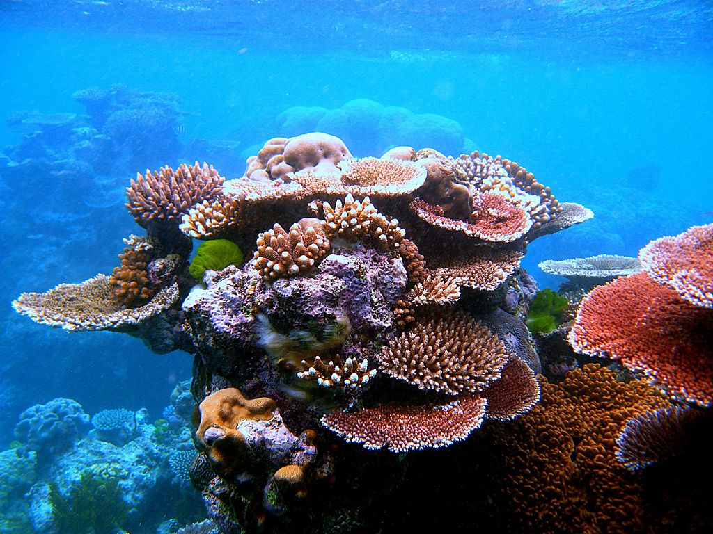 A variety of corals form an outcrop on Flynn Reef, part of the Great Barrier Reef near Cairns, Queensland, Australia. Photo by Toby Hudson, licensed under CC BY-SA 3.0.