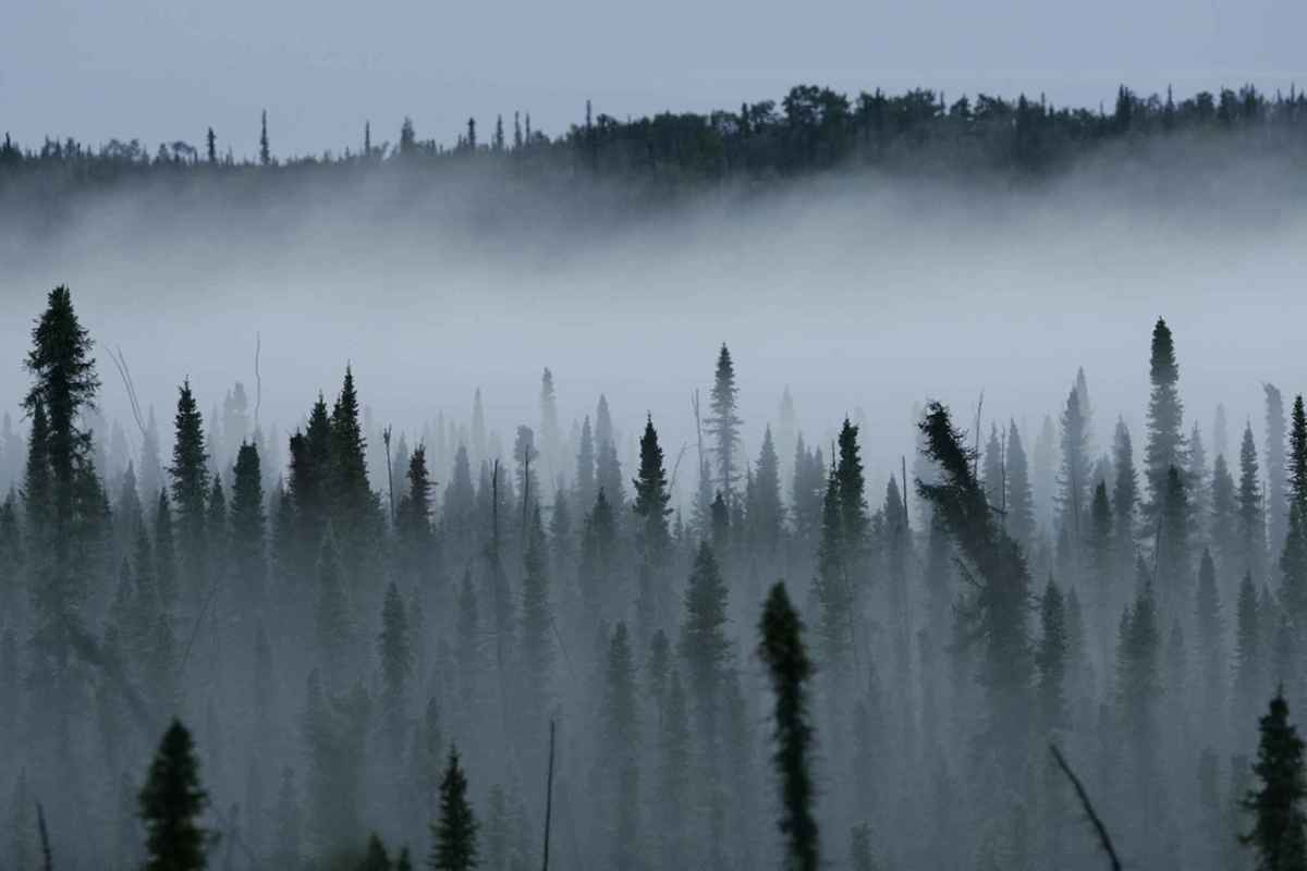 canada s eastern boreal forest could become a climate change refuge