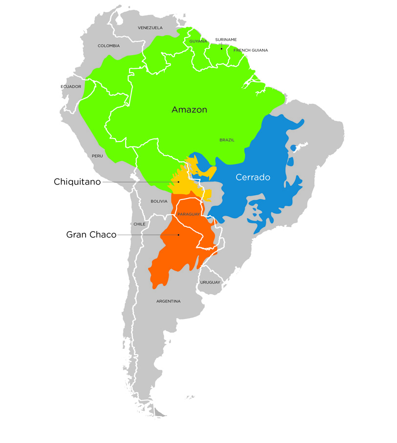 A number of forested ecosystems across South America remain at risk for conversion to cattle pasture, including (but not limited to) regions within the Amazon, the Cerrado, the Chaco, and the Chiquitano