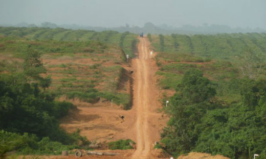 Sime Darby plantation in Cape Mount County. Photo courtesy JPN Liberia