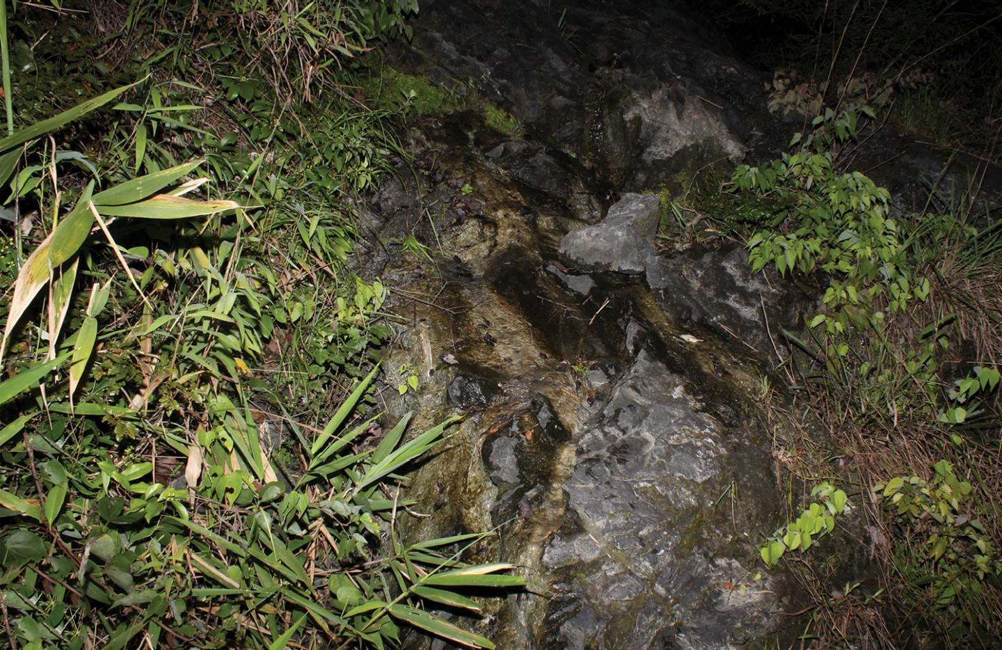 Limestone hillstream at the type locality of Yuebeipotamon calciatile. Photo by Hsi-Te Shih.