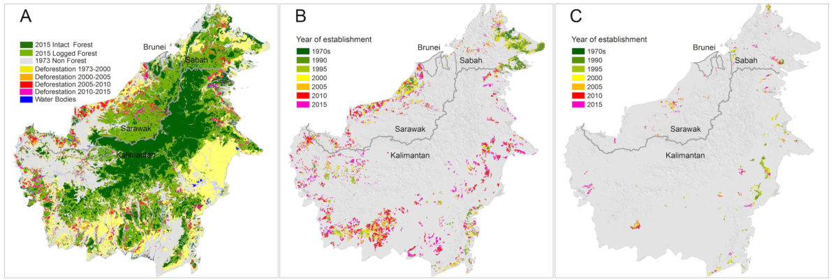 (A) Total deforestation (18.7 million hectares) and remaining old-growth and selectively logged forest in December 2015; (B) The expansion of industrial oil-palm plantations (7.8 million hectares); (C) The expansion of industrial pulpwood plantations (1.3 million hectares). Maps created using ArcMap v10.2.2 geospatial processing program, and used with permission from Gaveau et al.