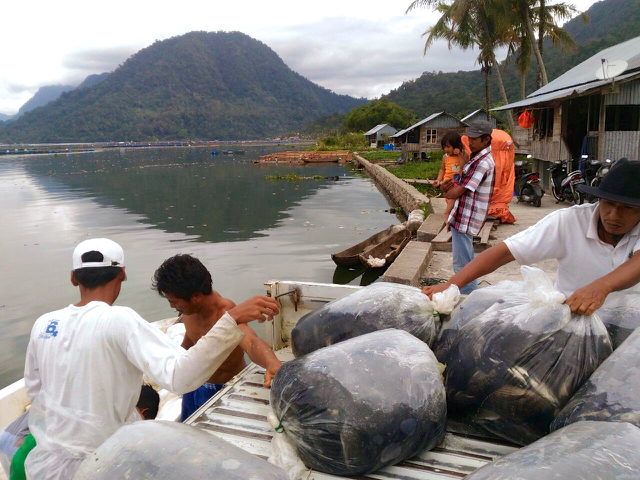 The dead fish are carried out of the lake in plastic bags. Photo by Viniola