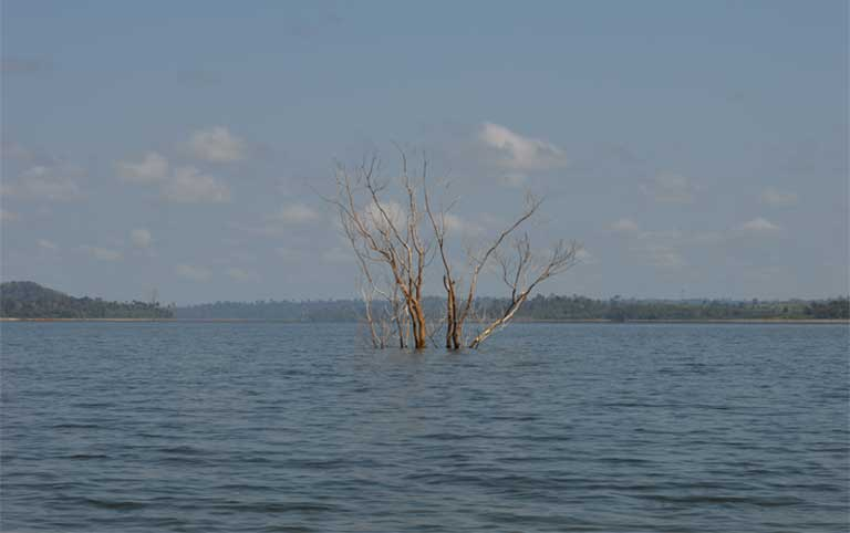 A tree submerged by the Belo Monte reservoir still shows above its surface. Amazon dams bring deforestation, not only through inundation, newly constructed roads and transmission lines, but because dam sites attract logging operations, mining companies, and other development. Photo by Zoe Sullivan