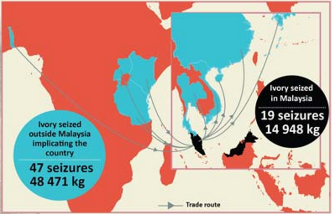 TRAFFIC's analysis of ivory seizure data shows that Malaysia has became the principal transit gateway, from where African-sourced ivory is redirected elsewhere in the region. Map by TRAFFIC.