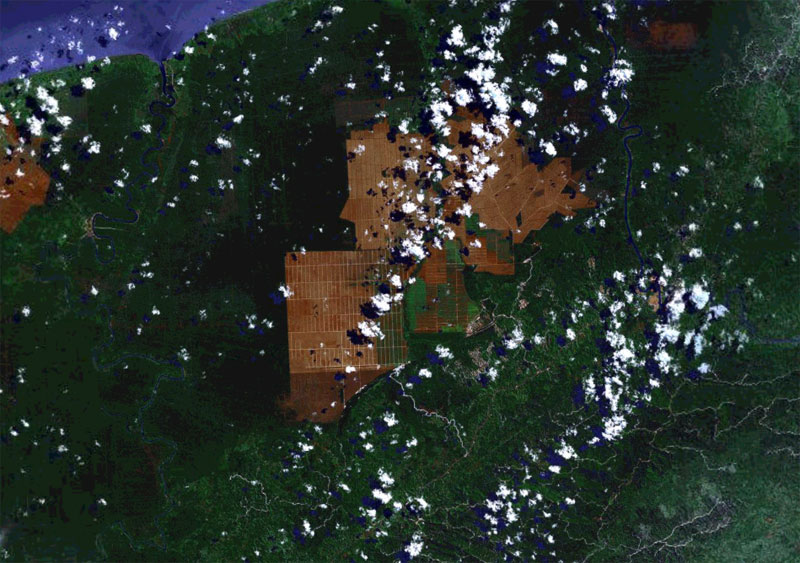 NASA image showing conversion of forests for oil palm in Sarawak.