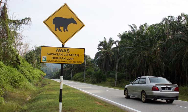 A road sign alerting drivers to the presence of the Malayan tapir in northern Selangor. Photo by Kate Mayberry