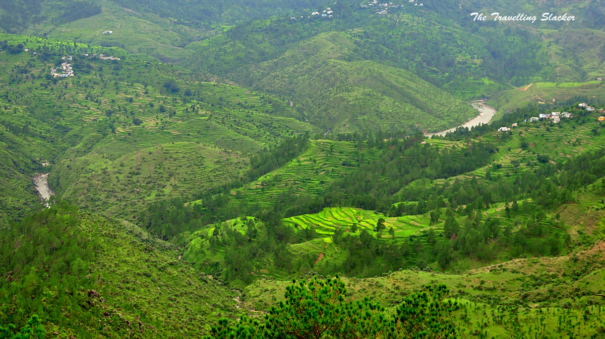 Forests_and_Valley_of_Uttarakhand_India