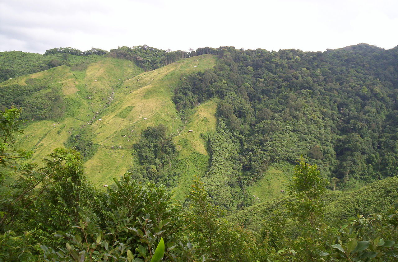 Large-scale deforestation in India has resulted in a decline in monsoon rainfall in India, especially in north and northeast India, a new study has found. Photo by BMC Ecology, from Flickr, Licensed under CC BY-SA 2.0