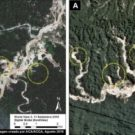 Progression of deforestation in Bahuaja-Sonene National Park. Image courtesy of MAAP. Data from Planet, Digital Globe (Nextview)