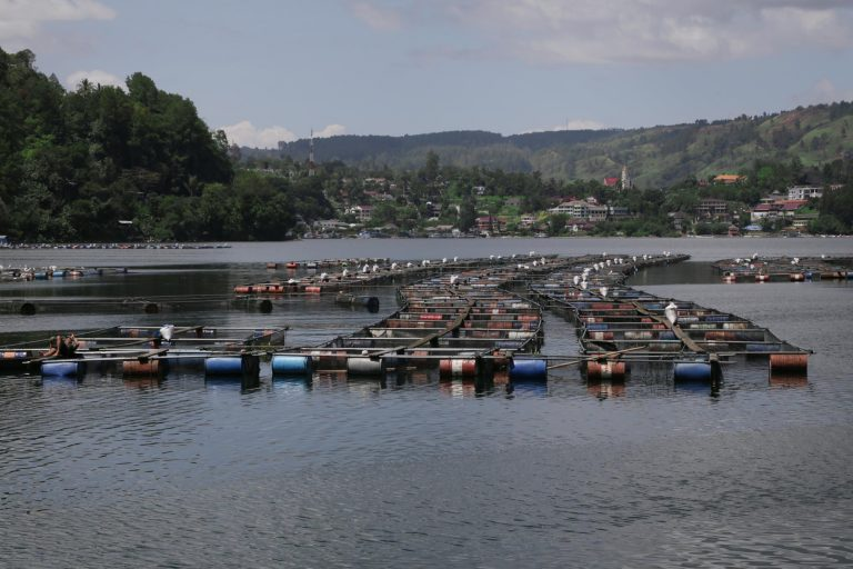 Fish farms at Sualan in Lake Toba. The aquaculture is a major contributor to the lake's pollution. Photo by Aria Danaparamita