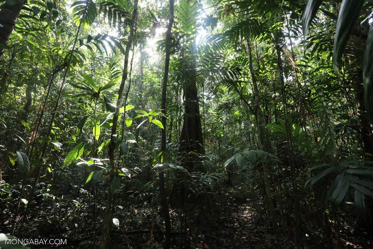 Rainforest in the Southern Cardamom Mountains. Photo by Rhett A. Butler