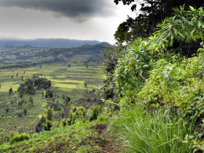 Field patterns in agricultural land on boundary of Parc de Volcans / Volcanoes National Park, Virunga Mountains, Rwanda
