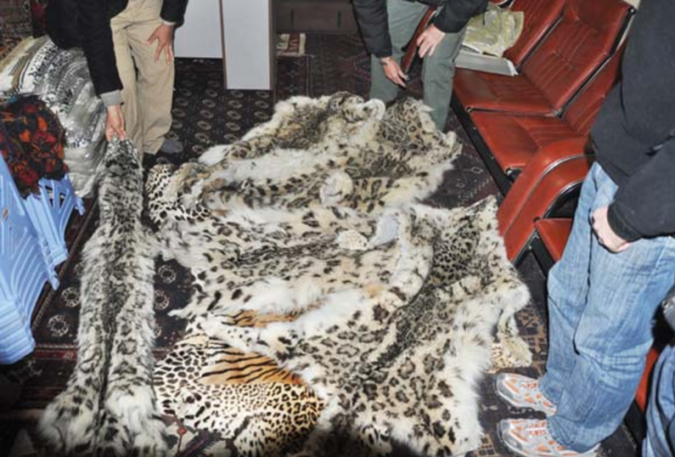 Snow Leopard, Tiger & Leopard skins for sale in Kabul, Afghanistan, 2011. Photo by D Lawson / WCS.