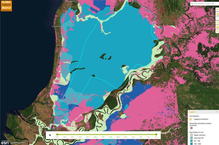 Global Forest Watch Commodities showing PT Mohairson Pawan Khatulistiwa's concession in Sungai Putri, including  the concession area and peat depth. Courtesy of World Resources Institute