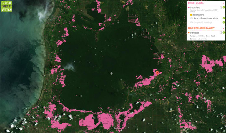Global Forest Watch image of Sungai Putri, including recent forest cover loss (pink and gold), with Urthcast images as a base layer. Courtesy of World Resources Institute.