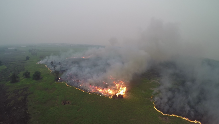 This fire burning across peatland in Sebangau in 2015 offers a preview of the fate that could befall Sungai Putri if it is drained and degraded. Courtesy of the Borneo Nature Foundation.