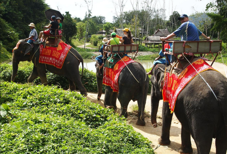 "Elephants used in elephant rides often go through a training process called ""crush"" in which they are frequently starved, beaten and isolated. Photo by Walter Lim. From Flickr, licensed under CC BY-SA 2.0."
