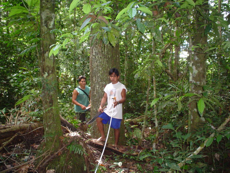 brazil-nut-activity-2-by-marco-pastor