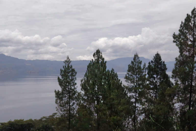 Pine trees are seen on Samosir Island in Lake Toba. Photo by Aria Danaparamita