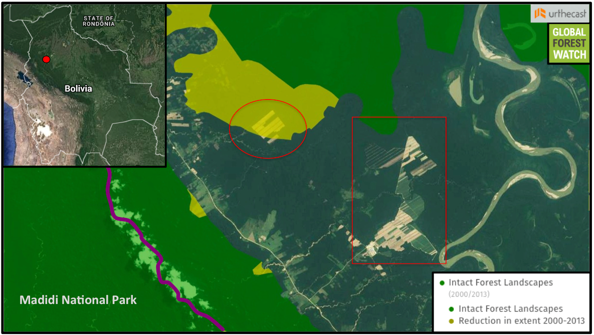 Forest-clearing for sugar cane has increased near Madidi National Park over the past month. Analysis of the western portion (circle) revealed 240 hectares (2.4 square kilometers) had been deforested by September 18. Most of this occurred in a particularly large, continuous tract of primary forest called an Intact Forest Landscape that was undisturbed in 2000. More clearing detected near a sugar cane processing plant (square) is approaching part of the IFL that was pristine as of 2013.