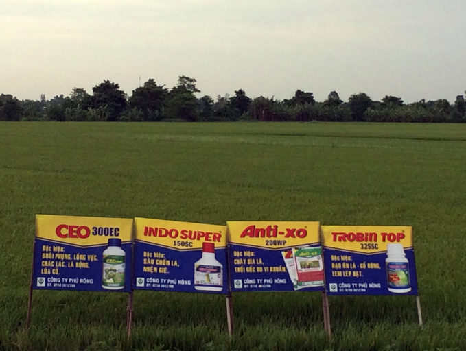 Advertisements for a cocktail of pesticides adorn a rice demonstration plot in the Mekong Delta. Photo by David Brown