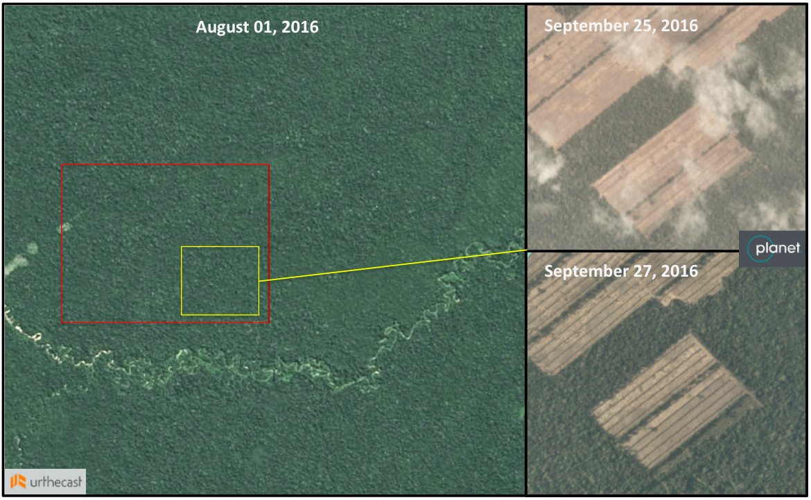 Development of the new sugarcane plantation started in mid-August and is occurring rapidly. A new rectangle of deforestation appeared in late September. Imagery from Urthecast (left) and Planet Labs (right)