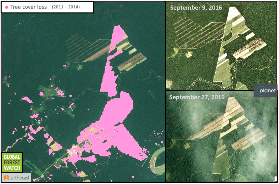 Global Forest Watch shows around 1,300 hectares (13 square kilometers) were cleared around a sugar cane processing plant between 2011 and 2014. Around 600 more hectares have been affected since then, with a ramp-up in activity last month. Inset imagery from Planet Labs and Urthecast; data from Global Forest Watch