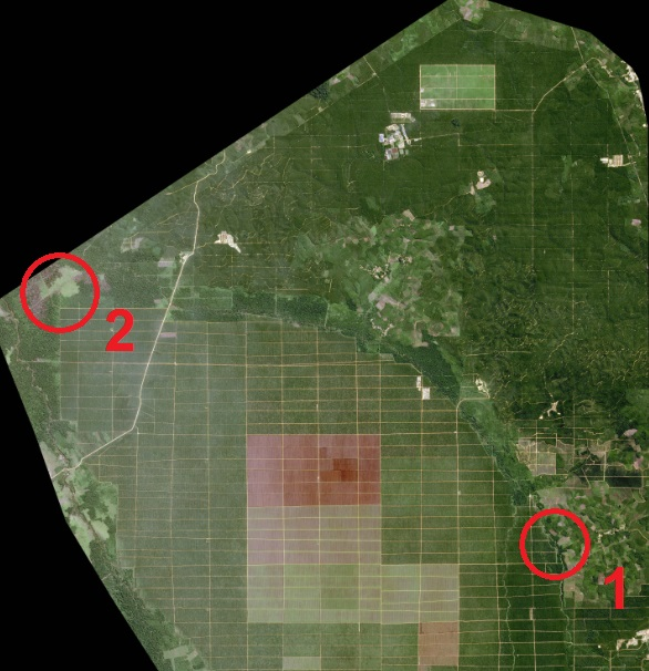 A view from the SPOT 6 satellite of an oil palm plantation in North Sumatra, Indonesia.