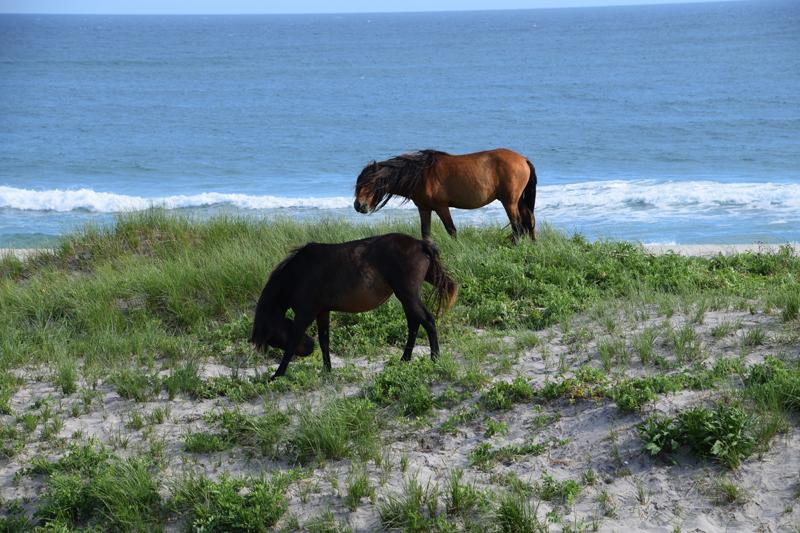 Horses atop a dune. Photo courtesy of Bill Barton.