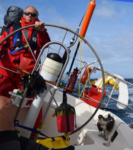 An Osprey Joins the Crew aboard Tazzarin. Photo courtesy of Bill Barton.