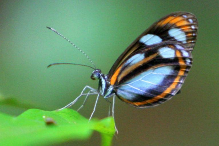 A butterfly in Yasuni. Photo by Jeremy A. Hance
