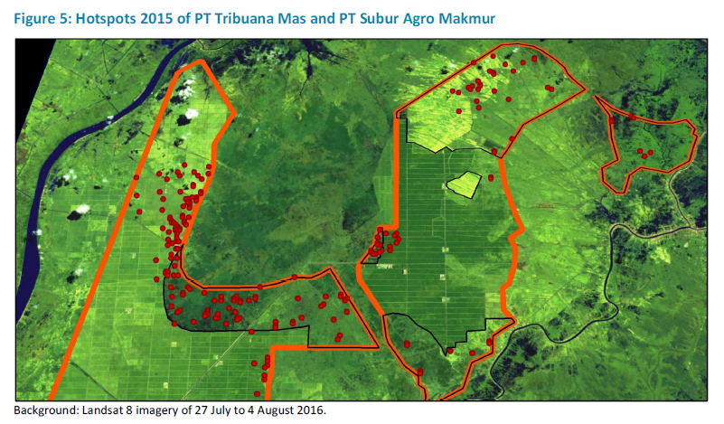 "An image from Aidenvironment's report shows the concession areas of PT Tribuana Mas (on the left side; within orange) and PT Subur Agro Makmur (the two areas within orange on the right side). The areas inside the black marked boundaries are not planted with oil palm. Most of the hotspots were recorded in areas that are not planted with oil palm. ""This is a common phenomenon."" according to Aidenvironment. ""Usually fires do not occur/spread in areas that have been planted with oil palm for at least a few years"""