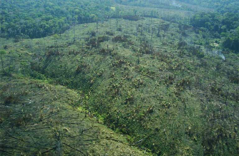 Degraded Amazon rainforest. Photo courtesy of the Brazilian Forest Service