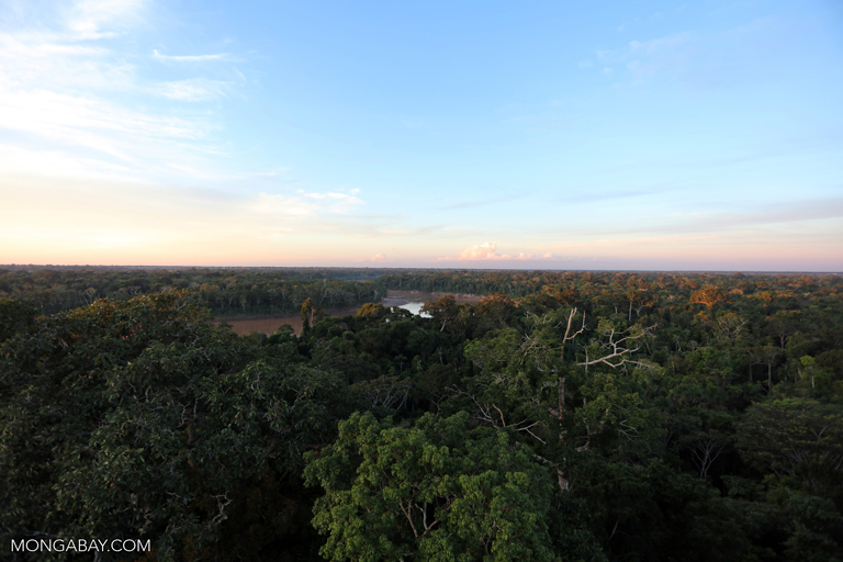 The continued survival of the Amazon rainforest as a carbon sink is vital to a world trying to hold down the amount of carbon in the atmosphere. Photo by Rhett A. Butler