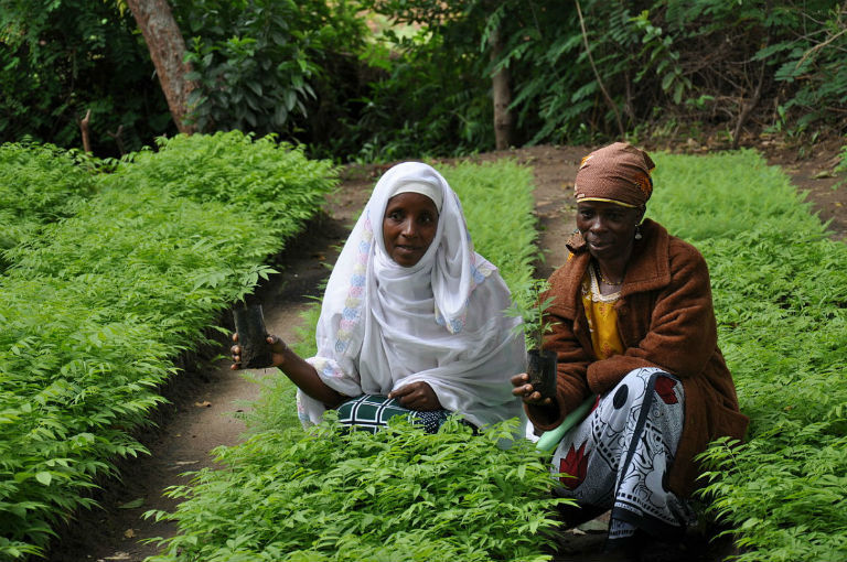 Women in Tanzania with seedlings for reforestation. Photo by USAID Africa