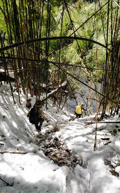 Treacherous field work. To study the Myanmar snub-nosed monkey the researchers had to traverse steep, snow covered landscapes; even then sightings are still rare. Photo by Jeremy Holden / Fauna & Flora International