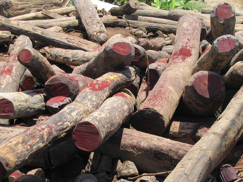 Illegal rosewood stockpiles in Antalaha, Madagascar. Photo by anonymous, licensed under CC BY-SA 3.0.
