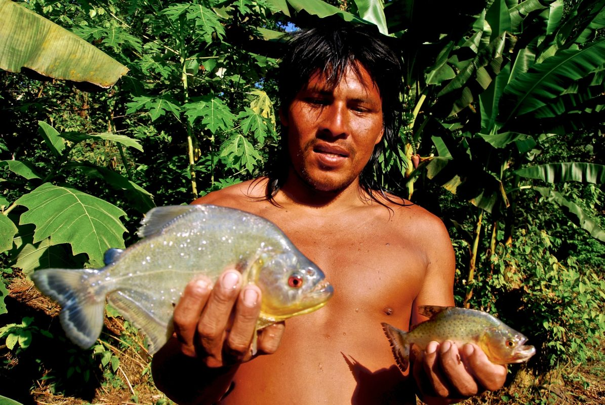 Otobo Baihua, a skilled naturalist and hunter, holds two species of piranhas that he caught in the Cononaco River. - Waorani Territory, Yasuni Biosphere, Ecuador. ©Ryan P. Killackey/Pollywog Productions