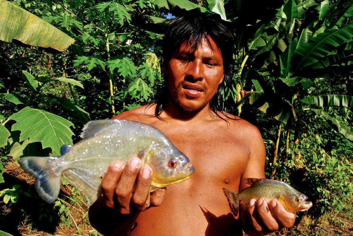 Otobo Baihua, a skilled naturalist and hunter, holds two species of piranhas that he caught in the Cononaco River. - Waorani Territory, Yasuni Biosphere, Ecuador. ©Ryan P. Killackey/Pollywog Productions