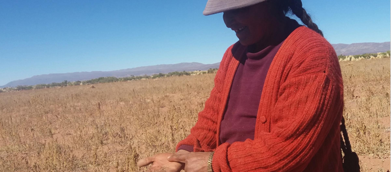 quinoa-crops-bolivia