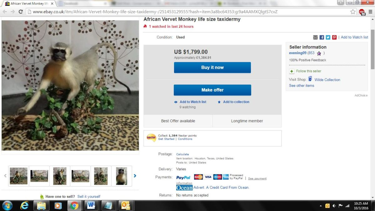 eBay listing for African vervet monkey taxidermy. This monkey is a CITES Appendix II species.