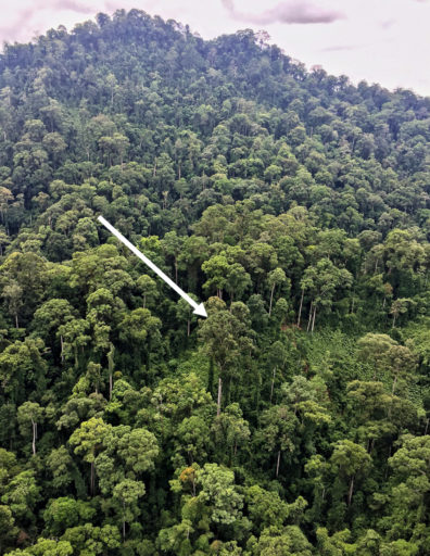 tallest-tree-in-tropics-helicopter-photo-gasner-copy