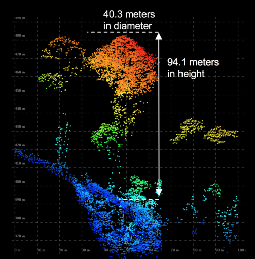 cao-lidar-tallest-tree-cross-sectional-view