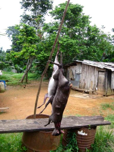 Bushmeat hangs for sale on a roadside village stand, near Makokou, Gabon. Photo by Ruby Harrison