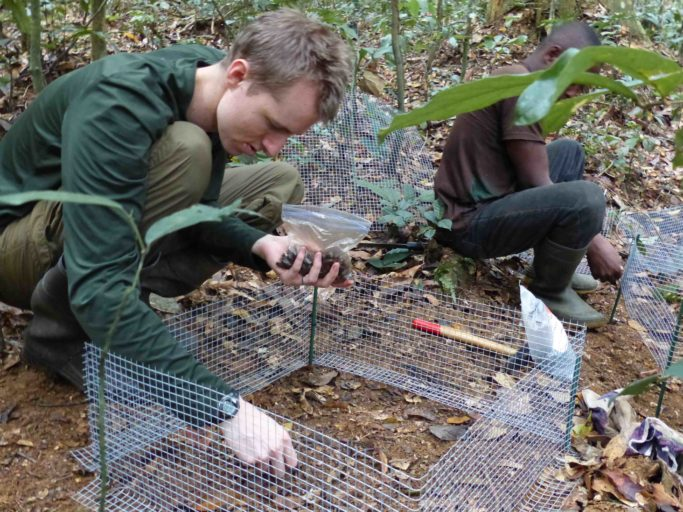 The study's lead author, Cooper Rosin, and field assistant Jeannot Mbelassanga set up the experimental seed exclosures, Ivindo National Park, Gabon. Photo by Rachel Rosin
